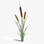 3d Cattail Plant