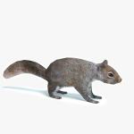 3d Squirrel