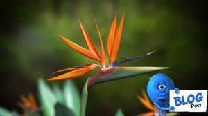 3d Bird of Paradise Model